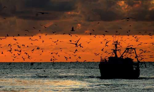 Protocollo d'intesa MIPAAF – Associazioni Nazionali pesca